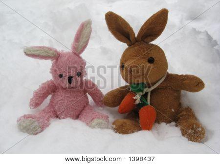 Snow Hares
