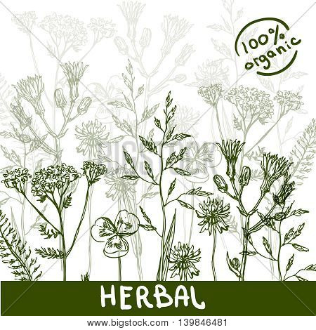 Beautiful hand drawn vector illustration sketching of wildflowers.Eco friendly drawing. Use for postcards, print for t-shirts, packaging of organic cosmetics