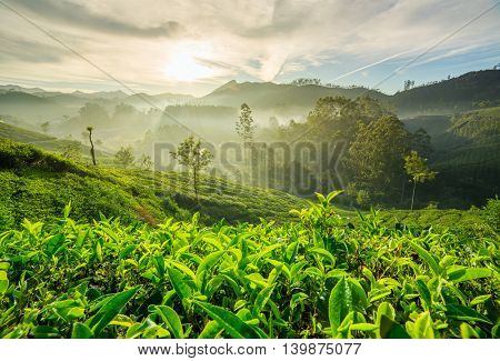 Sunrise over tea plantations in Munnar, Kerala, India