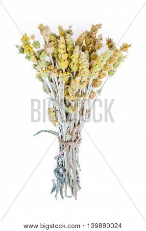 Bouquet of dried flowers yarrow on white background. The yarrow is known as herb widely used with curative intent.