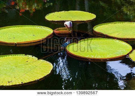 Flowers in water palace Tirta Ganga - Bali Island Indonesia - travel and architecture background