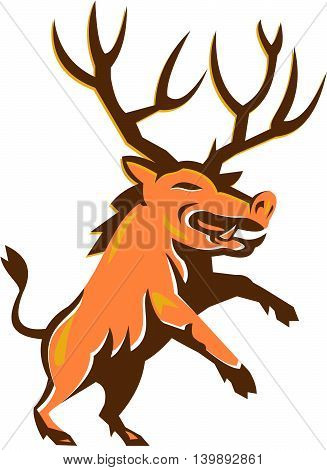 Illustration of a wild pig boar razorback with antlers prancing viewed from front set on isolated white background done in retro style.