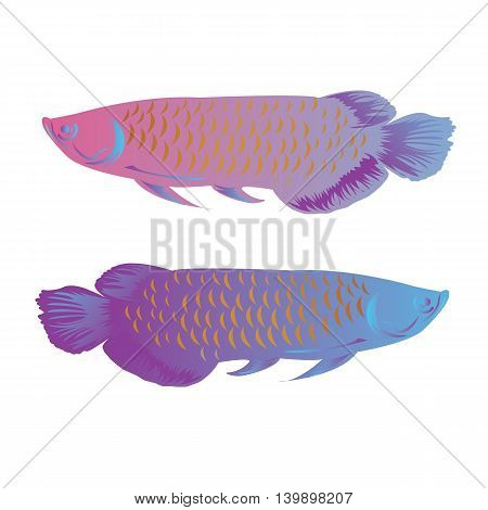 arowana fish isolated vector illustration colorful freshwater asian symbol of wealth vector