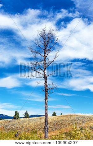 Big Dead Tree Vertical View