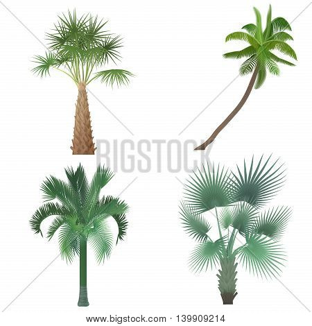 Exotic tropical realistic palm tree collection set