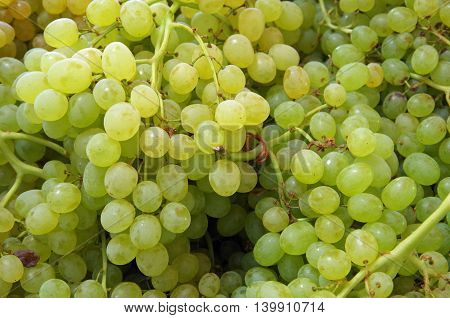 Bunches of small green grapes ready for market
