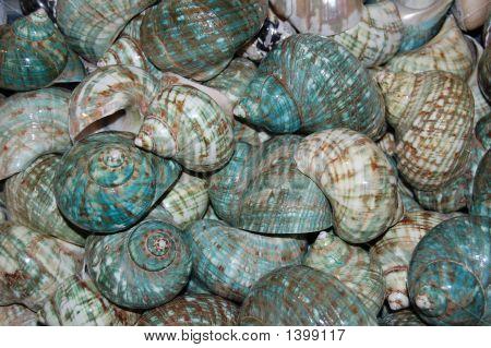 Green Shells Background