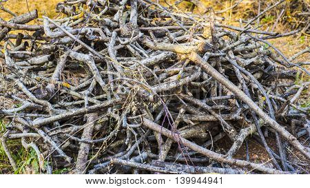 a pile of deadwood twings and trunks of small trees