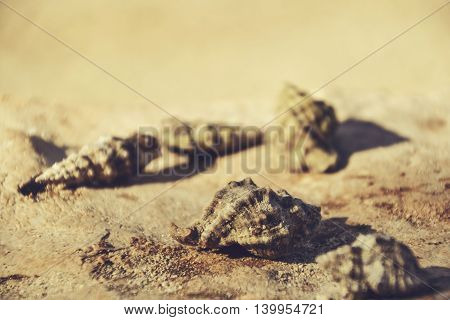 Beautiful seashells on the stone floor. Background with different seashells. Shallow depth of field.