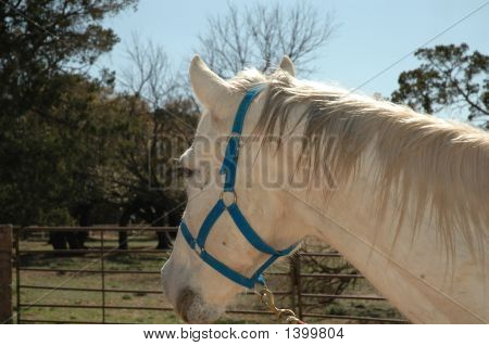 Horse Turned