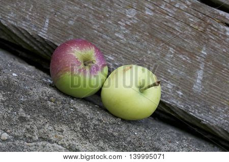Two ripe apples lying side by side on the background of the old wooden logs. Fruits are red and green and yellow. The of the diagonal.