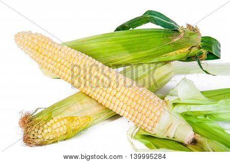 cob young corn isolated on a white backgroun