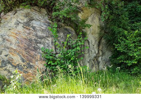 Landscapes of the Carpathian Mountains, closeup of natural stone rock