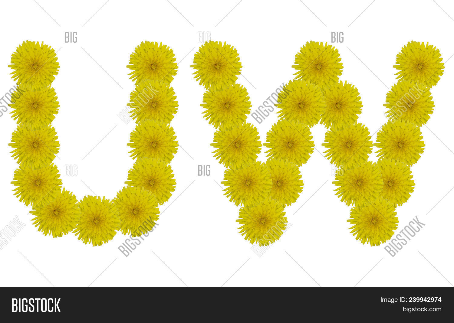 Floral Letters U W Image Photo Free Trial Bigstock
