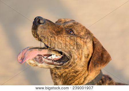 Mutt Dog Portrait In An Off-leash Dog Park In California.