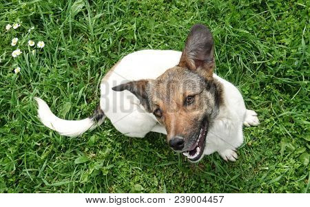 Lovely adopted mongrel dog is smiling happy pet looking up