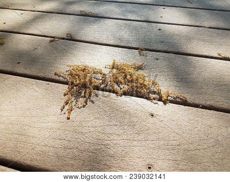 Pieces Of Pollen On A Composite Wood Deck