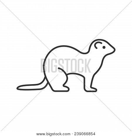 Ferret Linear Icon. Thin Line Illustration. Polecat. Contour Symbol. Vector Isolated Outline Drawing