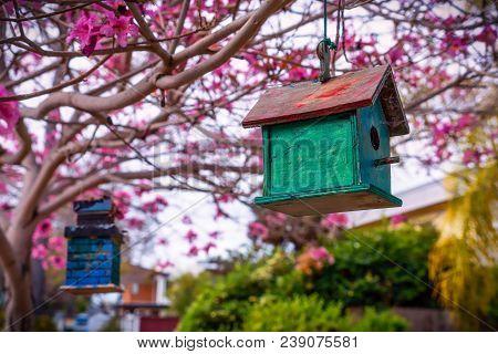 A Green Birdhouse Sitting In The Trees On A Street In Coronado, Ca.