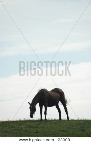 horse 56 silhouette in field room for copy poster