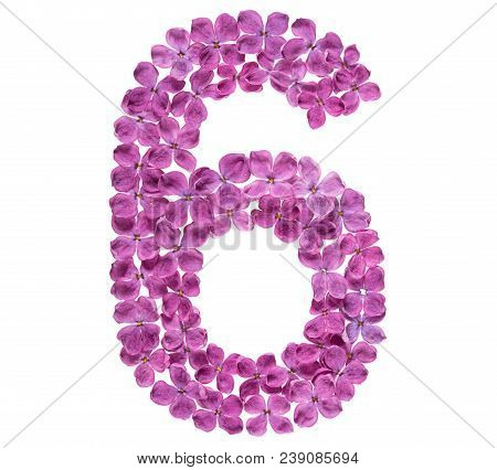 Arabic Numeral 6, Six, From Flowers Of Lilac, Isolated On White Background