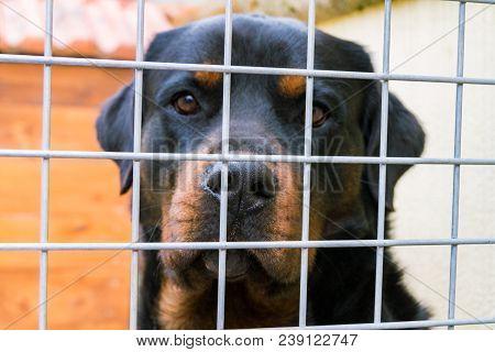 Dog Sitting Behind Bars, Dog In Animal Shelter, Sad Doggy Eyes