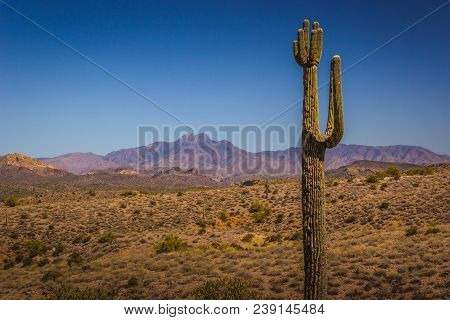 Beautiful Saguaro Cactus With Mountains In The Background On A Sunny Day With Clear Blue Sky, Lost D
