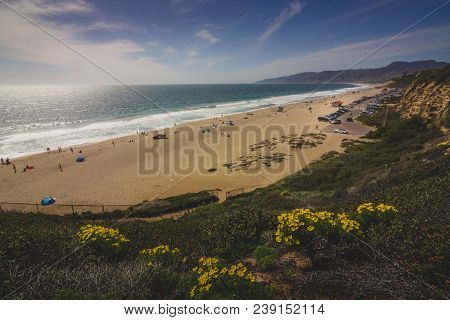 Relaxing Clifftop View Of Yellow Wildflowers Blooming At Point Dume State Beach, Malibu, California