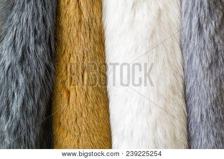 Fur, Colored Naturar Fur Texture. Closeup Photo.