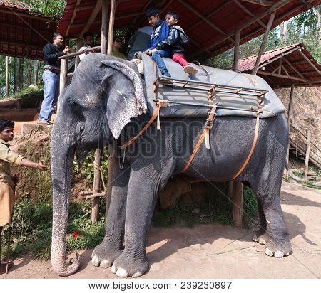 Tourists Riding On An Elefant Around The Park In Kerala State, South India