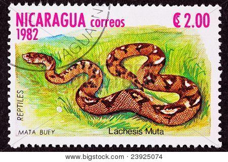 Canceled Nicaraguan Postage Stamp Bushmaster Snake Venomous Pitviper Lachesis Muta