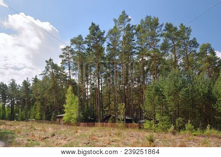 Pine Forest Above Autocamp Andrea In Machuv Kraj Tourist Area In Spring Before Start Of Main Season