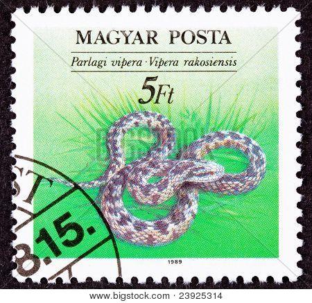 Hungarian Postage Stamp Danubian Meadow Viper Vipera Ursinii, Rakosiensis