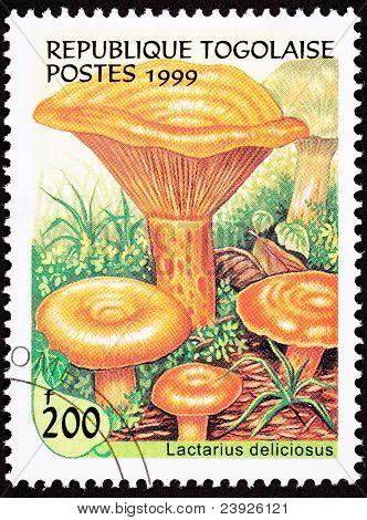 Canceled Togo Postage Stamp Saffron Milk Cap Mushroom Lactarius Deliciosus