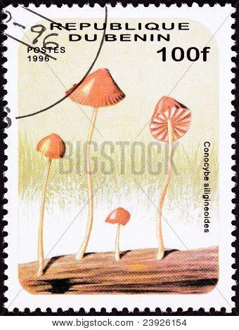 Canceled Benin Postage Stamp Umbrella Shaped Psychedelic Mushroom, Conocybe Siligineoides