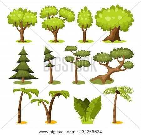 Set Of Cartoon Trees. Fir-trees, Pines, Birches, Palm, Aspens And Acacia Trees