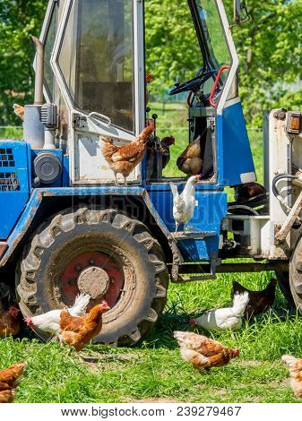 chickens on a small tractor