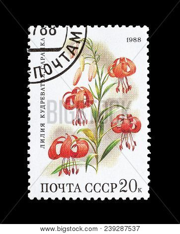 Soviet Union - Circa 1988 : Cancelled Postage Stamp Printed By Soviet Union, That Shows Turk Cap Lil