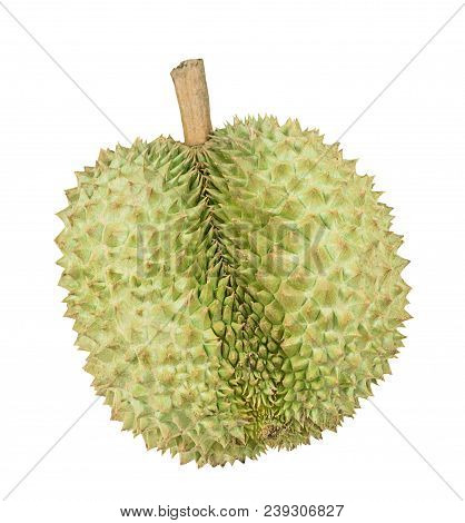Fresh Durian, King Of Fruit From Thailand Isolated On White Background With Clipping Path.
