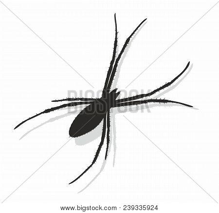 The Silhouette Of A Black Predatory Spider.