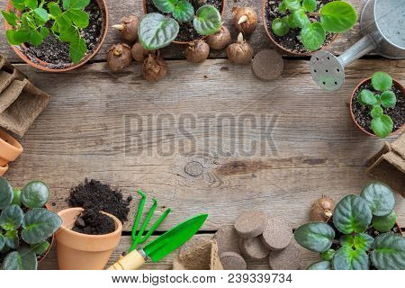 Several Flowerpot Of Houseplant. Planting Potted Flowers And Equipment For Pot Plants. Copy Space Fo