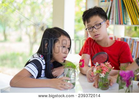 Group Of Students Observing And Learning Flower By  Magnifying Glass On Desk At Shool