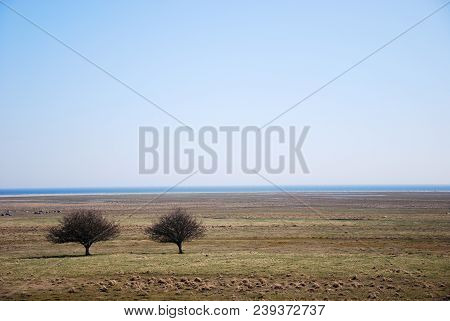 Great Plain Grassland With Two Trees By Ottenby On The Swedish Island Oland In The Baltic Sea