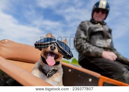 Shetland Sheepdog Sits With Sunglasses In A Motorcycle Sidecar