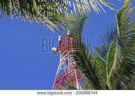 Red And White Communication Tower In Palm Trees. Radio Mast On Tropical Island. Electric Supply In S