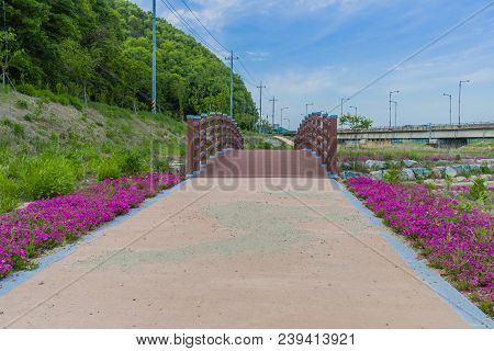 Wooden Footbridge In Public Park With Violet Flowers And Lush Green Trees On Left Side And Highway O