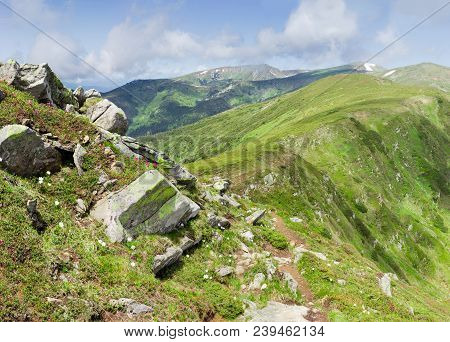 Slopes And Crest Of Mountain Range With Stones Outcrops, Grass And Flowering Rhododendrons And Other
