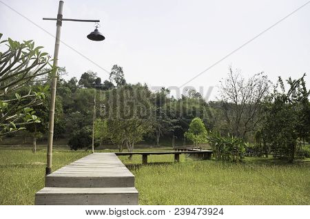 Wooden Walkway To Tropical Garden, Stock Photo