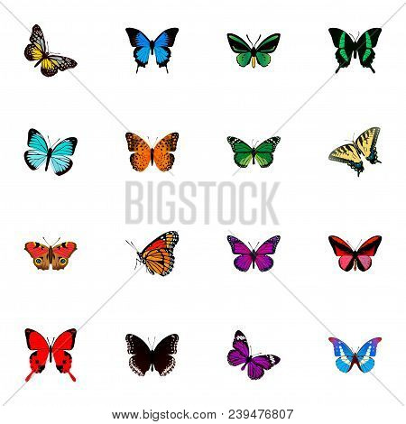 Set Of Butterfly Realistic Symbols With Agrias Claudina, Precis Almana, Monarch And Other Icons For