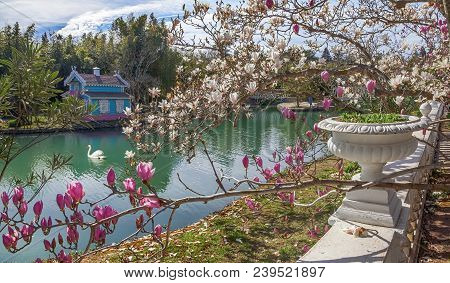 Aradler, Russia - March 17, 2018: Flowering In Park Southern Cultures.